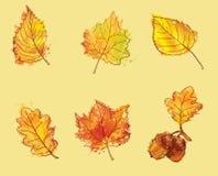 Fogli di autunno impostati Fotografia Stock Libera da Diritti