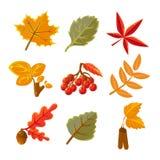 Fogli di autunno impostati Fotografie Stock