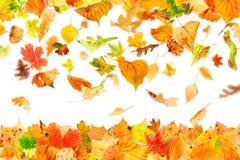 Fogli di autunno isolati Fotografia Stock Libera da Diritti