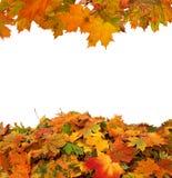 Fogli di autunno isolati Immagini Stock Libere da Diritti