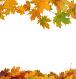 Fogli di autunno isolati Fotografia Stock