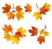 Fogli di autunno isolati immagine stock libera da diritti