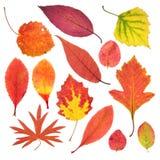 Fogli di autunno isolati su bianco Immagini Stock Libere da Diritti