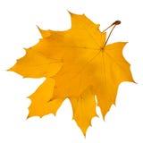 Fogli di autunno isolati su priorità bassa bianca Immagine Stock