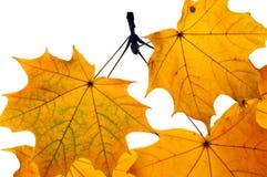 Fogli di autunno isolati su priorità bassa bianca Fotografia Stock