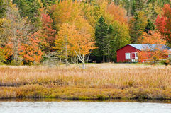 Fogli di autunno in legno rustico Fotografia Stock Libera da Diritti
