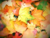 Fogli di autunno luminosi fotografie stock libere da diritti