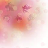 Fogli di autunno luminosi sui precedenti astratti Immagine Stock