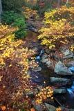 Fogli di autunno lungo insenatura Immagine Stock Libera da Diritti