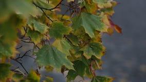 Fogli di autunno nel vento stock footage