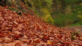 Fogli di autunno nel vento archivi video