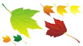 Fogli di autunno nel vettore Fotografia Stock