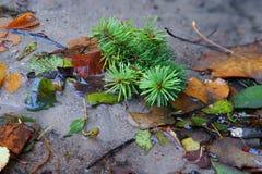 Fogli di autunno nell'insenatura dell'acqua Immagini Stock
