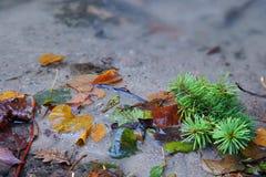 Fogli di autunno nell'insenatura dell'acqua Immagine Stock Libera da Diritti