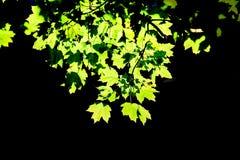 Fogli di autunno pieni di sole Immagini Stock Libere da Diritti