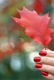 Fogli di autunno rossi in una mano Fotografia Stock Libera da Diritti