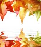 Fogli di autunno sopra acqua Fotografie Stock Libere da Diritti