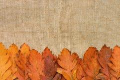 Fogli di autunno sopra la priorità bassa della tela da imballaggio Immagini Stock