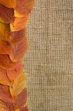 Fogli di autunno sopra la priorità bassa della tela da imballaggio Fotografie Stock Libere da Diritti
