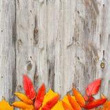 Fogli di autunno sopra priorità bassa di legno Fotografia Stock Libera da Diritti