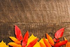 Fogli di autunno sopra priorità bassa di legno Immagine Stock Libera da Diritti