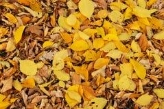 Fogli di autunno in sosta fotografia stock libera da diritti