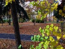 Fogli di autunno in sosta Immagini Stock Libere da Diritti
