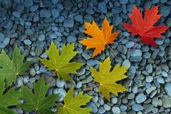Fogli di autunno su acqua Immagine Stock