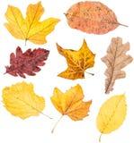 Fogli di autunno su bianco Fotografia Stock Libera da Diritti