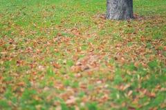 Fogli di autunno su erba Immagini Stock