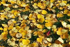 Fogli di autunno su erba Fotografia Stock