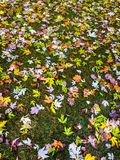 Fogli di autunno su erba verde Fotografia Stock Libera da Diritti