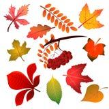 Fogli di autunno su priorità bassa bianca Illustrazione di vettore Fotografie Stock Libere da Diritti