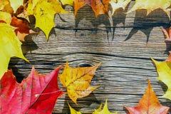 Fogli di autunno su priorità bassa di legno Posto per il vostro testo Immagine Stock