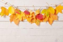 Fogli di autunno su priorità bassa di legno Fotografia Stock Libera da Diritti