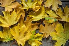 Fogli di autunno su priorità bassa di legno Bordo d'annata Colore giallo Fotografia Stock Libera da Diritti
