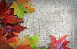Fogli di autunno su tela da imballaggio immagini stock libere da diritti
