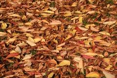 Fogli di autunno su terra Fotografia Stock