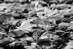 Fogli di autunno su terra Fotografia Stock Libera da Diritti
