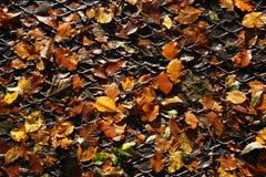 Fogli di autunno su una griglia del metallo Fotografie Stock Libere da Diritti