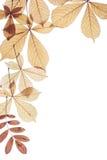 Fogli di autunno su una priorità bassa bianca Fotografia Stock Libera da Diritti