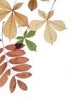 Fogli di autunno su una priorità bassa bianca Immagini Stock Libere da Diritti