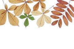 Fogli di autunno su una priorità bassa bianca Immagini Stock