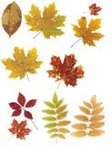 Fogli di autunno su una priorità bassa bianca. Fotografia Stock Libera da Diritti