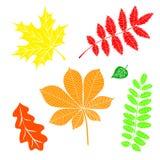 Fogli di autunno su una priorità bassa bianca Fotografie Stock