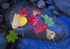 Fogli di autunno su una roccia del fiume immagine stock libera da diritti