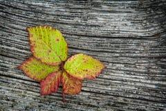 Fogli di autunno sui precedenti di legno Fotografia Stock Libera da Diritti