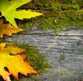 Fogli di autunno sui vecchi precedenti di legno Fotografie Stock Libere da Diritti