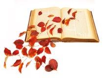 Fogli di autunno sul libro dell'annata Fotografia Stock Libera da Diritti