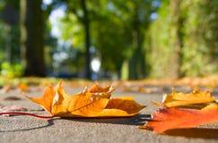 Fogli di autunno sul marciapiede Immagine Stock